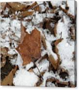 Dead Leaves In The Snow Canvas Print