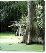 Wild Florida Dead Mans River Canvas Print