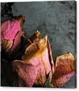 Dead Roses 1 Canvas Print