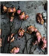 Dead Roses 5 Canvas Print