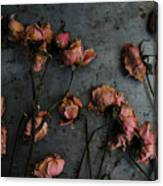 Dead Roses 6 - Photo Canvas Print