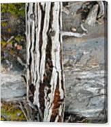Dead Tree Above Tree Line I Canvas Print