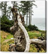 Dead Tree At Ecola Park Canvas Print