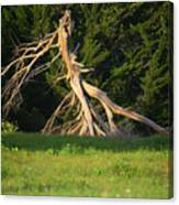 Dead Tree II Canvas Print