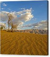 Dead Tree In The Desert  Canvas Print