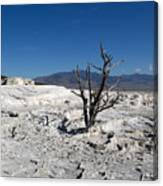 Dead Tree In Yellowstone Park Hot Springs  Canvas Print