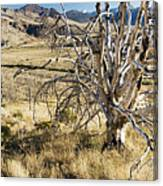Dead Tree Panorama Canvas Print