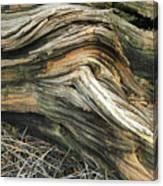 Dead Tree Textures Canvas Print