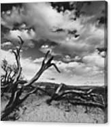 Dead Trees at Mesquite Dunes Canvas Print