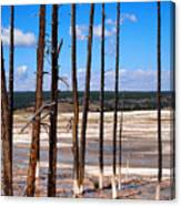 Dead Trees Standing In Hot Springs Within Yellowstone National P Canvas Print