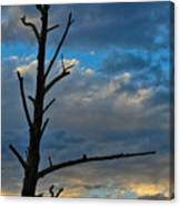Dead With Color Canvas Print