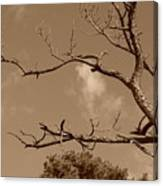 Dead Wood Canvas Print