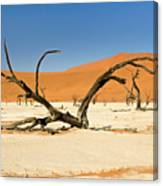 Deadvlei With Tree Canvas Print