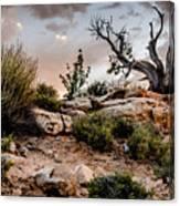 Deadwood Sunset Canvas Print