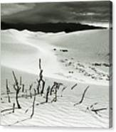 Death Valley Brush Canvas Print