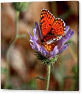 Death Valley Butterfly Canvas Print