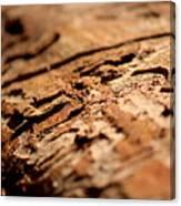 Debarked Tree Canvas Print