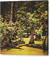 Decayed Vegetation - Run Swamp, North Carolina Canvas Print
