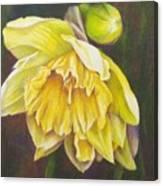 December Flower Narcissus Canvas Print
