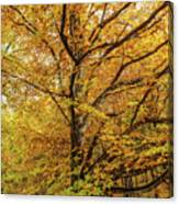 Deciduous Forest In The Autumn Canvas Print