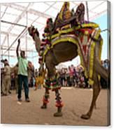 Decorated Camel Pushkar Canvas Print