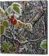 Decorated With Leaves Canvas Print