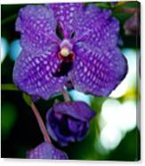 Deep Blue Orchid Canvas Print