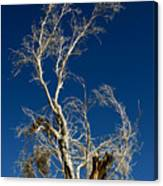 Deep Blue White Tree Canvas Print