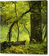 Deep Forest Scenic Canvas Print