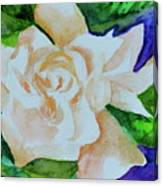 Deep Gardenia Canvas Print