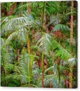 Deep In The Forest, Tamborine Mountain Canvas Print