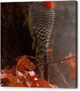 Deep In The Forest Woodpecker Canvas Print