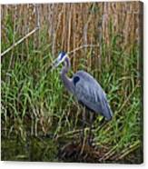 Deep In The Swamps Canvas Print