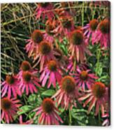 Deep Pink Echinacea Straw Flowers Green Leaf And Grass Background 2 9132017 Canvas Print