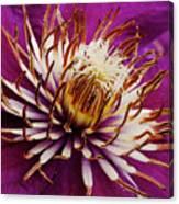 Deep Purple Clematis Canvas Print