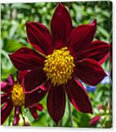 Deep Red And Yellow Flowers Canvas Print