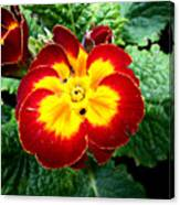 Deep Red Bright Yellow Canvas Print