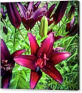 Deep Red Lillies Canvas Print