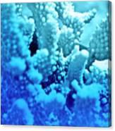Deep Sea Coral Canvas Print