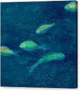 Deep Swim Canvas Print