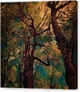 Deep Trees Canvas Print
