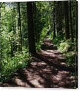 Deep Woods Road Canvas Print