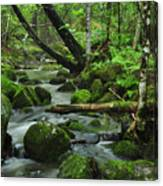 Deep Woods Stream Canvas Print