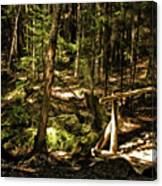 Deep Woods Trail Canvas Print