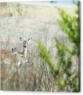 Deer 005 Canvas Print
