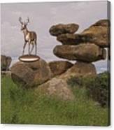 Deer 11 Canvas Print