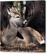 Deer 336 Canvas Print