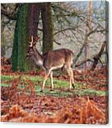 Deer Among The Ferns Canvas Print