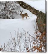 Deer At Castlewood Canyon Canvas Print