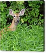 Deer Beauty II Canvas Print